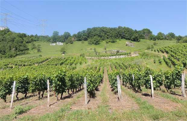 Ruta del vino de Saboya