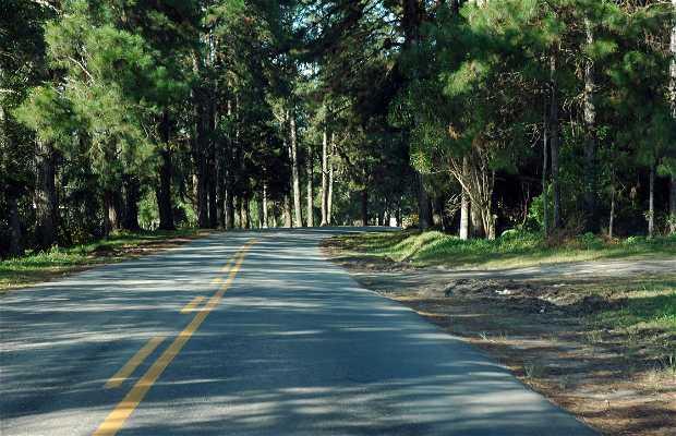 Carretera Graciosa