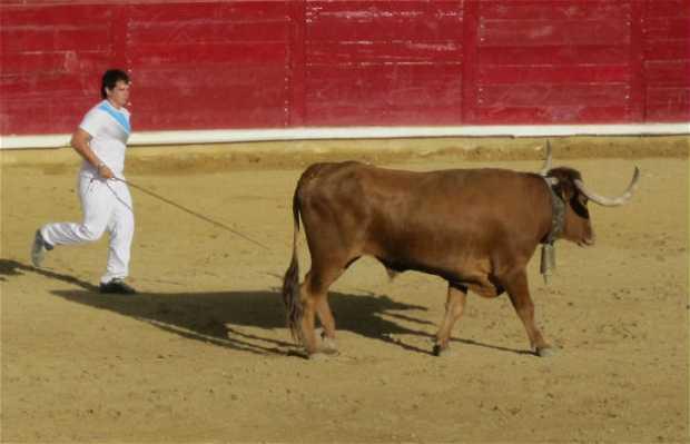 Corrida de touros (Encierro de Pamplona)