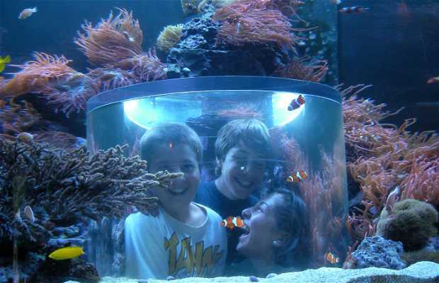 The Manta Rollercoaster at Sea World