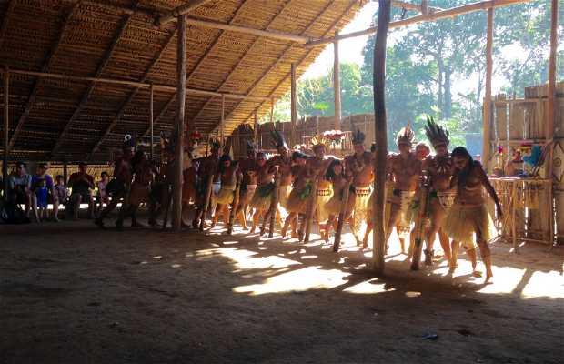 Aldeia Tupé - Tribo Indígena Dessana Tukana