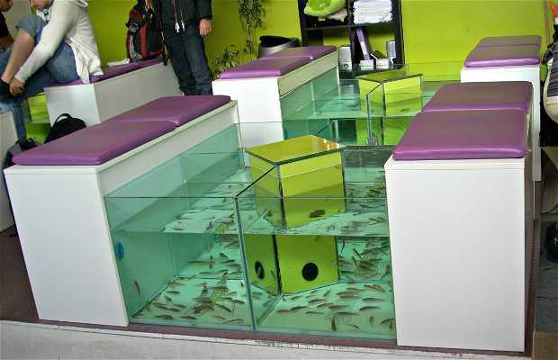 Zoola Fish