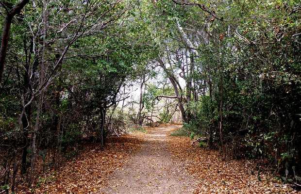 Le Tunnel végétal et les Grottes du Troupeau