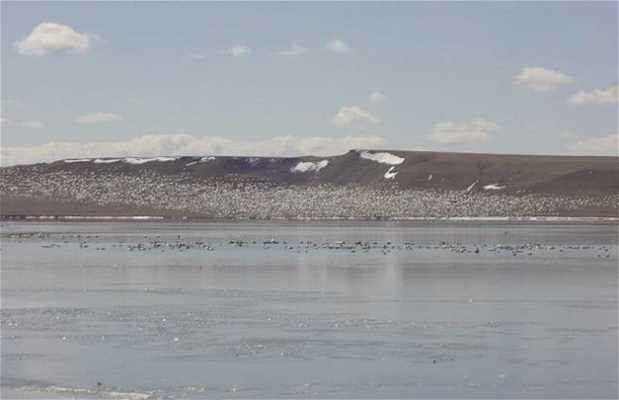 Freezeout Lake