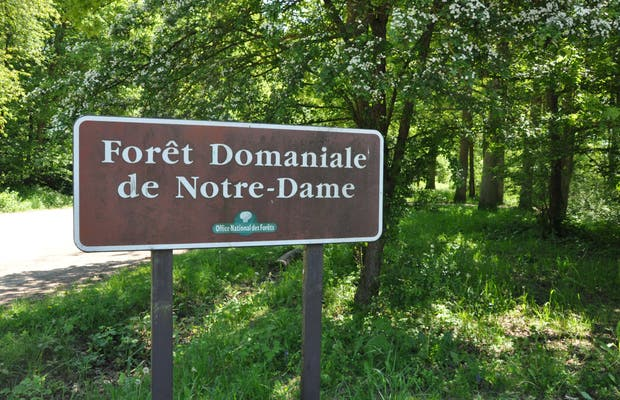 Notre-Dame Forest
