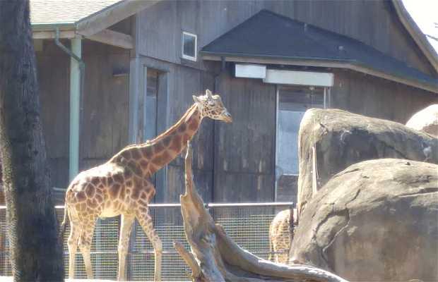 Zoo San Francisco