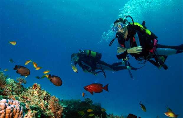 Mergulho no Aquário de Zanzibar