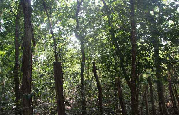Zona de arboles Chicozapote