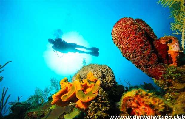 UnderwaterCuba