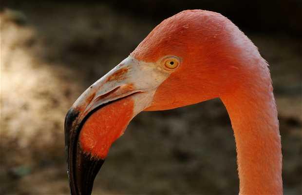 Zoo di Barranquilla