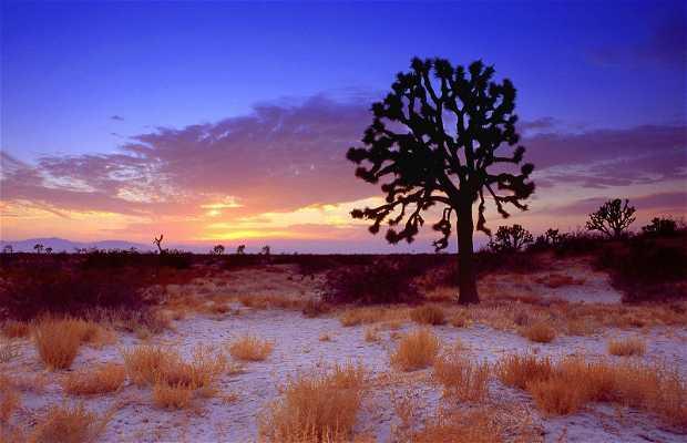 Désert du Mojave (High Desert)