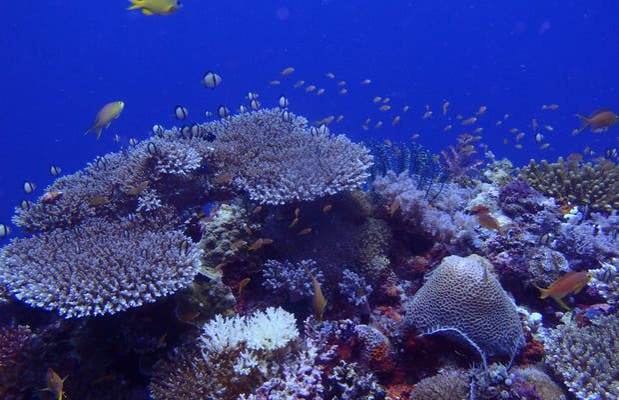 Diving in Malapascua island