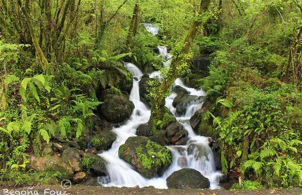Parque Natural las Fragas del Eume