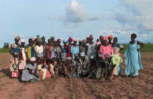 Gruppo di donne impresarie di Ngayene a Nioro