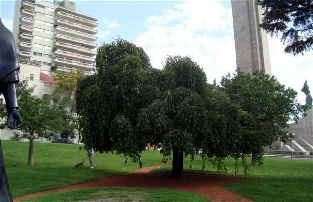 Plaza de la Coronación