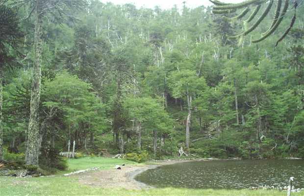 """Santuario de la naturaleza """"El Cañi"""""""