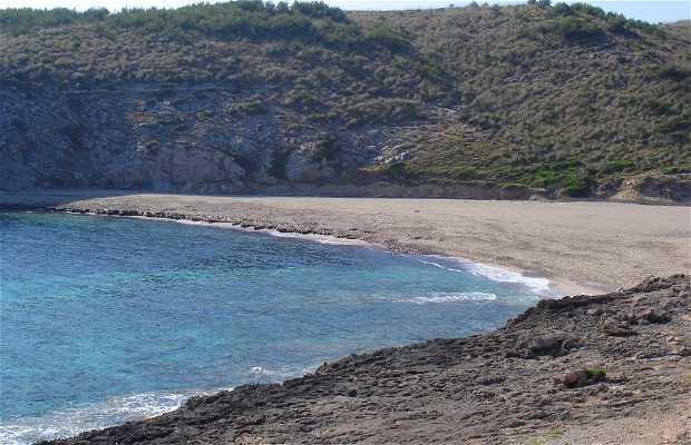 Torta Cove