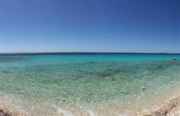 Playa veli zal