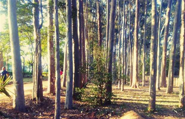 Parque do Piqueri