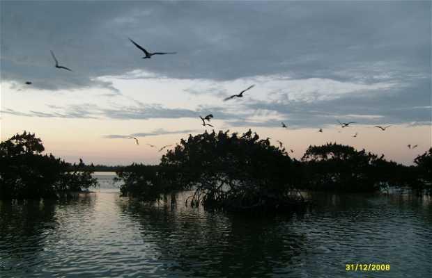 Muelle de Isla Aguada