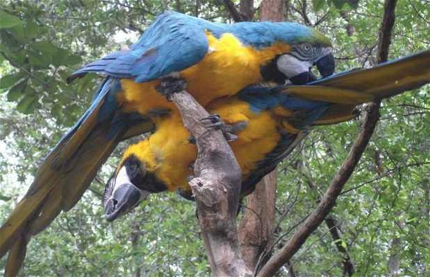 Le zoo du parque historico de Guayaquil