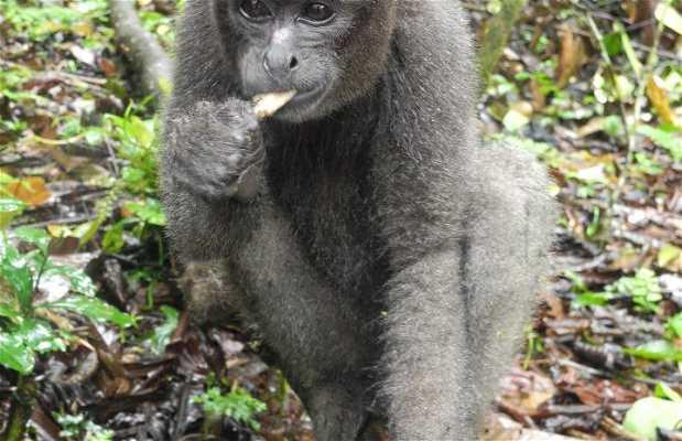 Paway Centro Ecoturistico Amazonico
