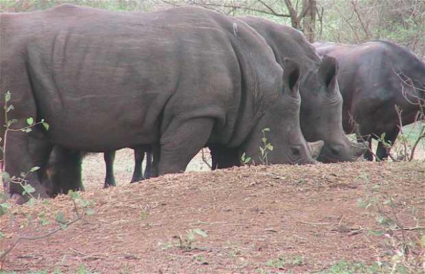 Bandia Nature Reserve