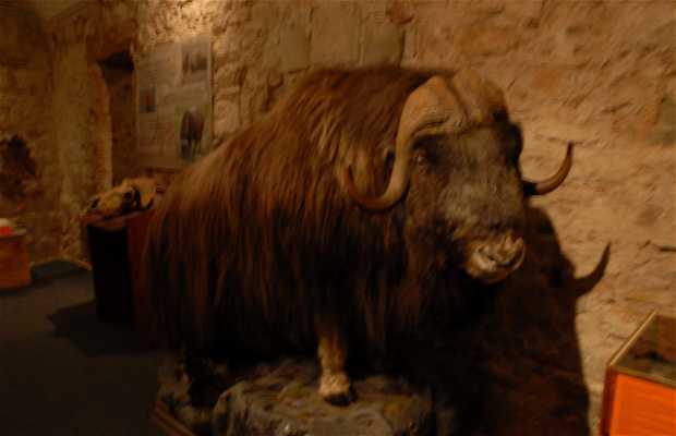 The Mammoth Museum