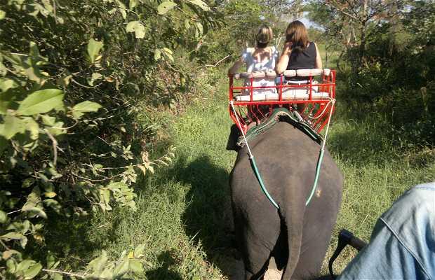 Paseo de elefante, Bangkok