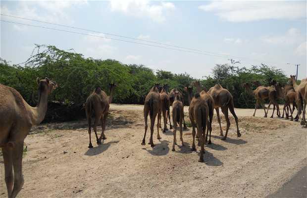 Pueblos entre Jodhpur y Ranakpur