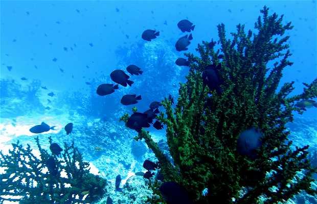 Inmersión en Sea Garden