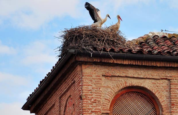 Cigüeñas de Alcala