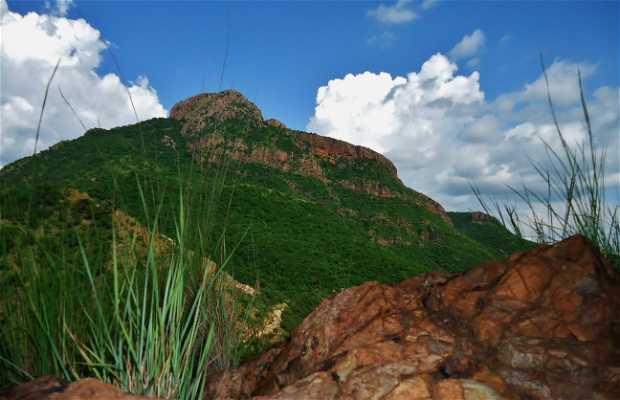 Cerro la Aguja