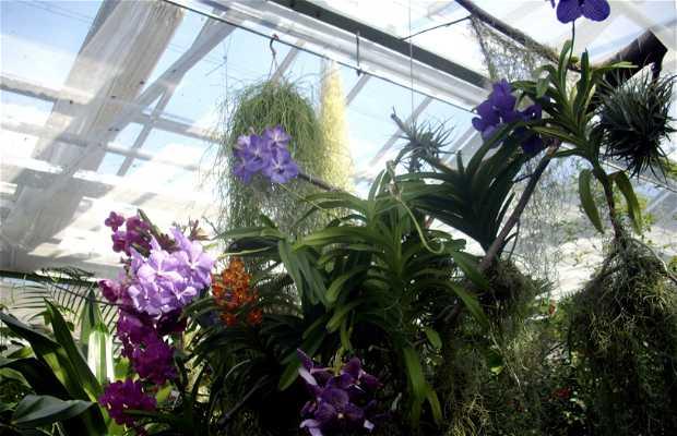 Île des fleurs Mainau