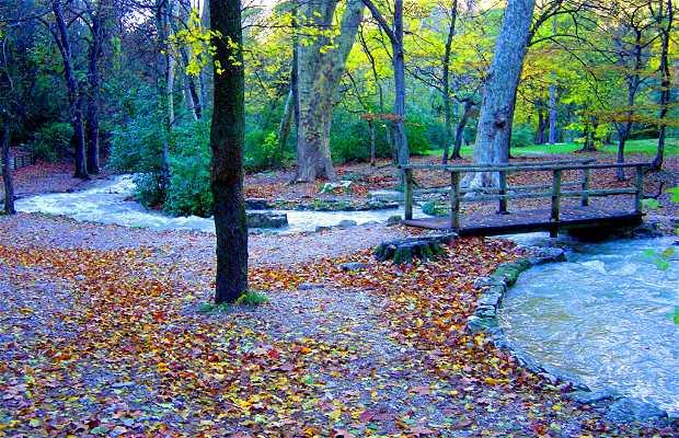 Bosque de Gémenos