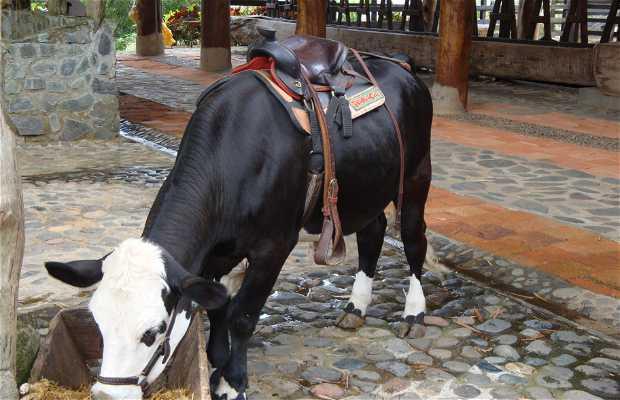 Parque de Panaca