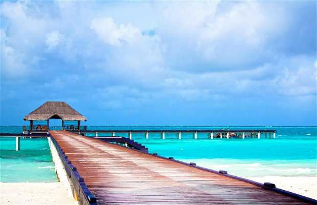 Iles des Maldives