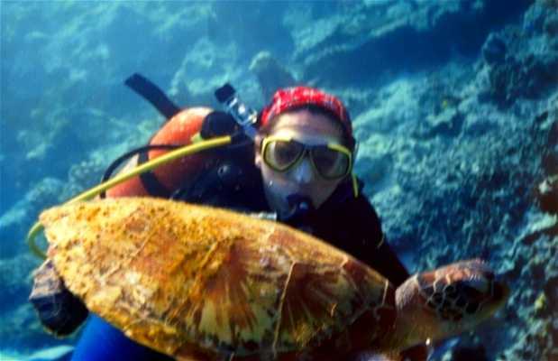 Tortugas en la Isla Sipadán