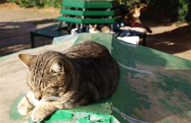 Casas de los gatos