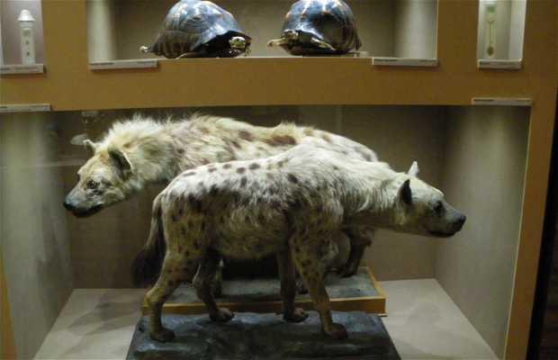 The Nancy Museum Aquarium