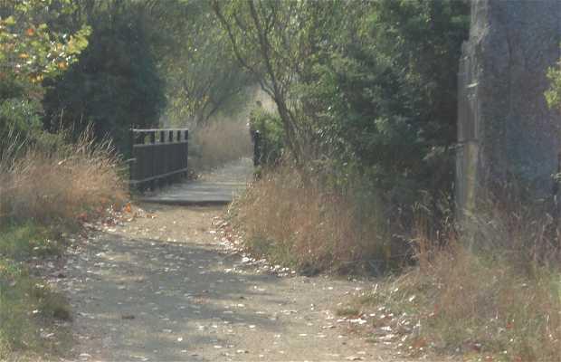 Bosque Dos Peregrinos