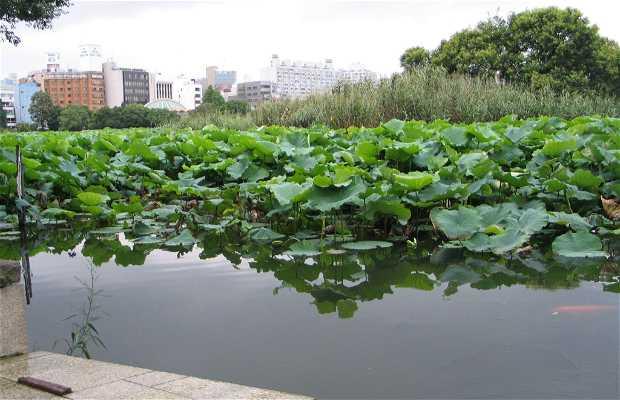 Estanque shinobazu en tokio 1 opiniones y 8 fotos for Fotos estanques