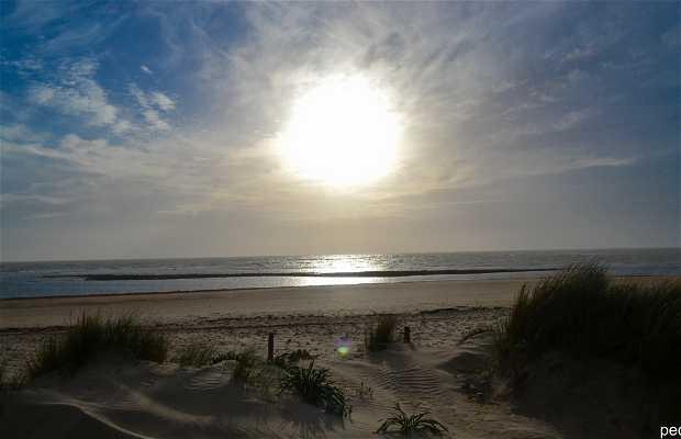 Playa del Camarón