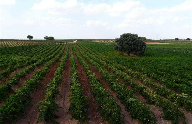 Bodega Vitis Natura. Vinos Y Viñedos Ecológicos