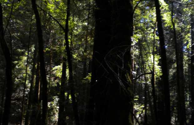 Parque Estatal Armstrong Woods