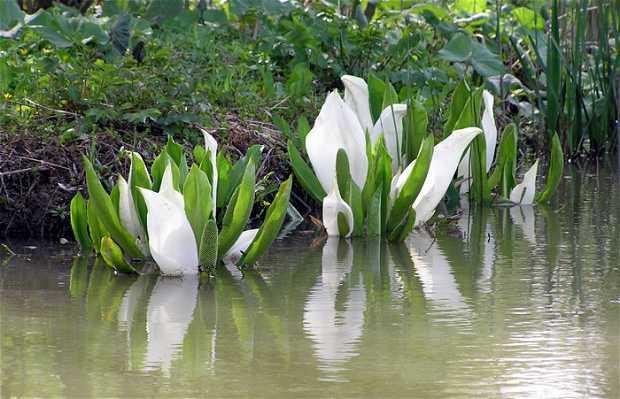 Jardin d'eau de l'Aubepré