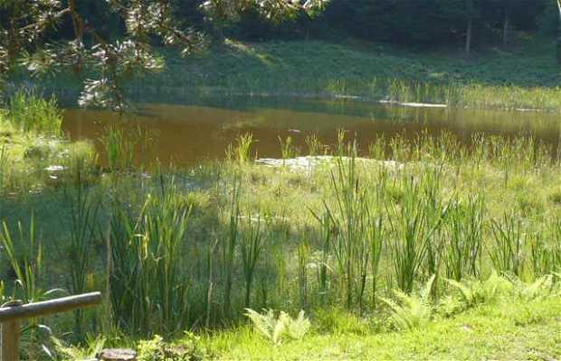 Lago de las Ranas