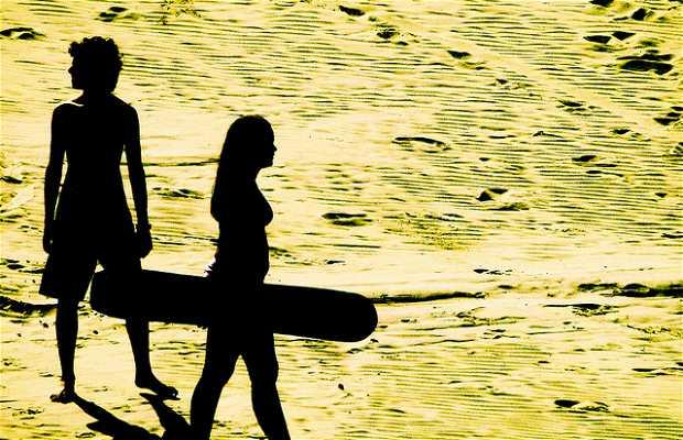 Sandboard sur la plage de Joaquina