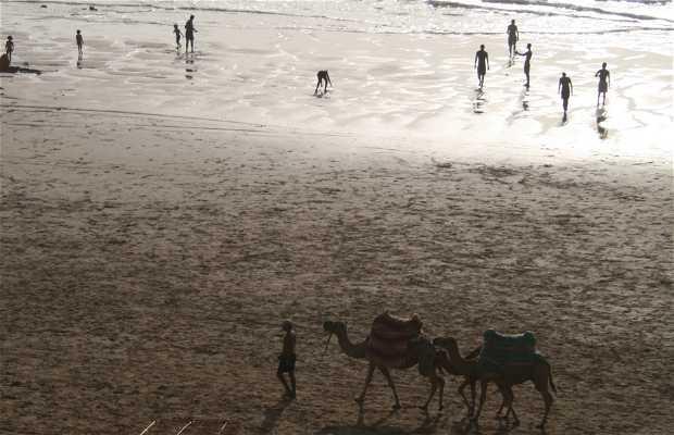 Playa de las Palomas