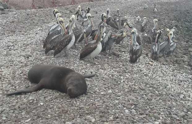 Playa de los Lobos y los Pelícanos